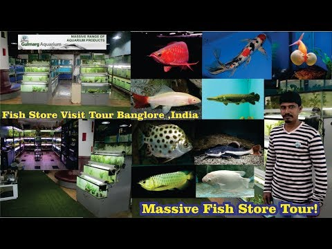 Gulmarg AQUARIUM STORE Tour - MASSIVE FISH STORE! Banglore