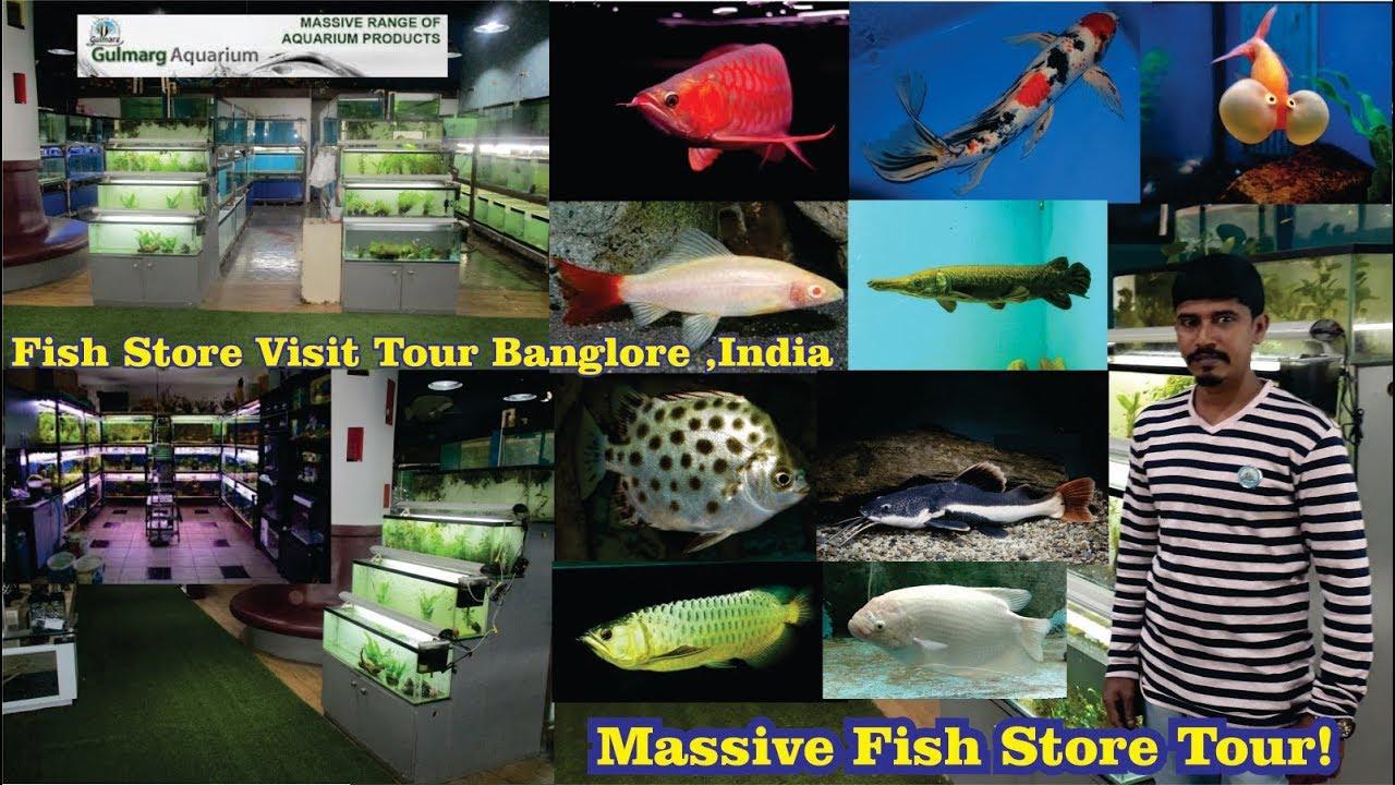 Gulmarg Aquarium Store Tour Massive Fish Store Banglore Youtube