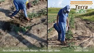 TerraZan - Fertilizante Orgánico Mineral | Finca Duberlandia - Vereda Navajas, Puerto López, Meta