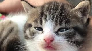 Our cutie pie kitten 😍