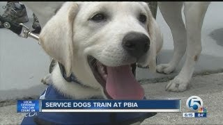 Guide Dogs Train At Palm Beach International Airport