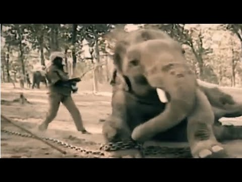 """Peace 4 Animals & Wildlife SOS Launch """"Refuse to Ride Elephants"""" Campaign to End the Cruel Practice of Riding Elephants in India"""