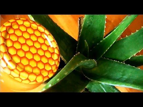 Как лечить в домашних условиях гастрит медом