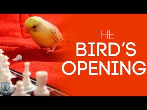 The Bird's Opening: A very aggressive one! - GM Roman Dzindzichashvili