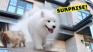 새로 이사한 집을 처음 본 강아지들의 반응!