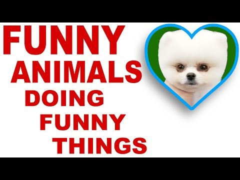 🐼 Funny Animals compilation 🤣 Funniest 🐶 Dogs and 😻 Cats 😇