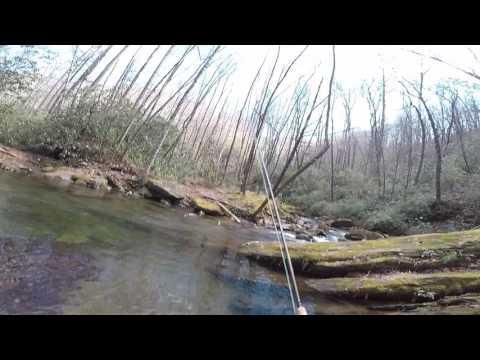 Curtis Creek