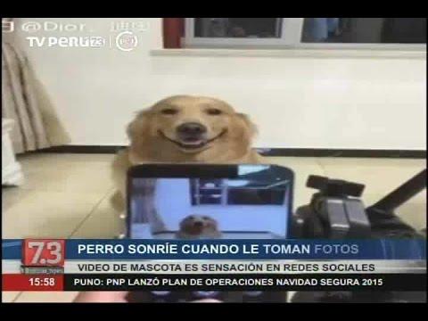 Youtube: Perro sonríe cuando le toman un selfie