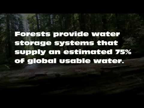 Think Forests, Think Water, Think Humanity
