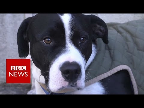The vet caring for homeless hounds - BBC News