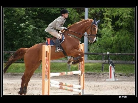 Cheval course hippique saut d 39 obstacle youtube - Frison saut d obstacle ...