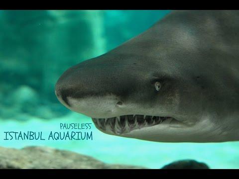 Turkey Trip - Istanbul Aquarium: Insane Creatures! #3