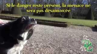 Tenue de Chien  L'agression chez le chien 2015 02 22