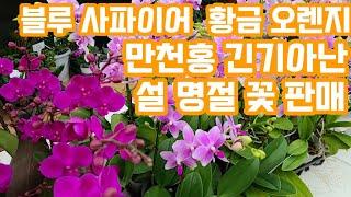 야생화판매 아파트베란다 정원 가드닝 플랜테리어 화초식물…