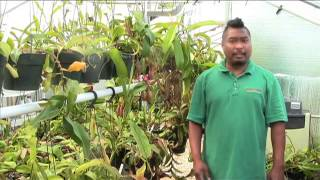 carnivorous plant care for july 2014