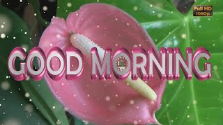 good-morning-wishes-free-animated-ecards-morning