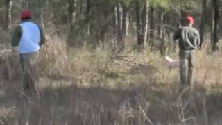 Hunting Bobwhite Quail  - The REAL Deal