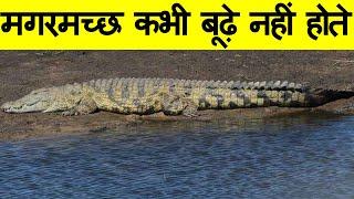 यह वीडियो नहीं देखा तो क्या देखा | Most Amazing Facts in Hindi about interesting world