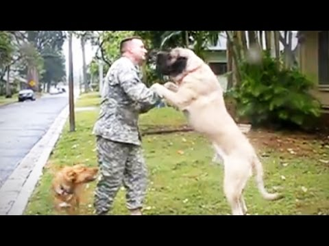 Thumbnail: [NEW] DOGS MEET OWNERS after LONG TIME 💕 (HD) [Funny Pets]