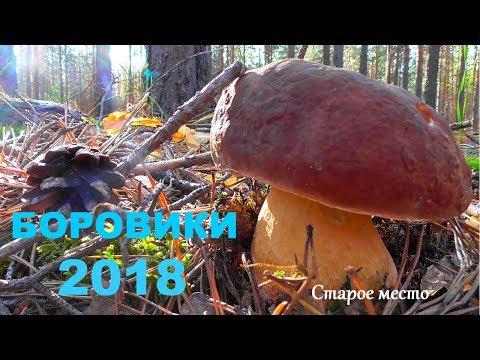 Как выглядит гриб боровик