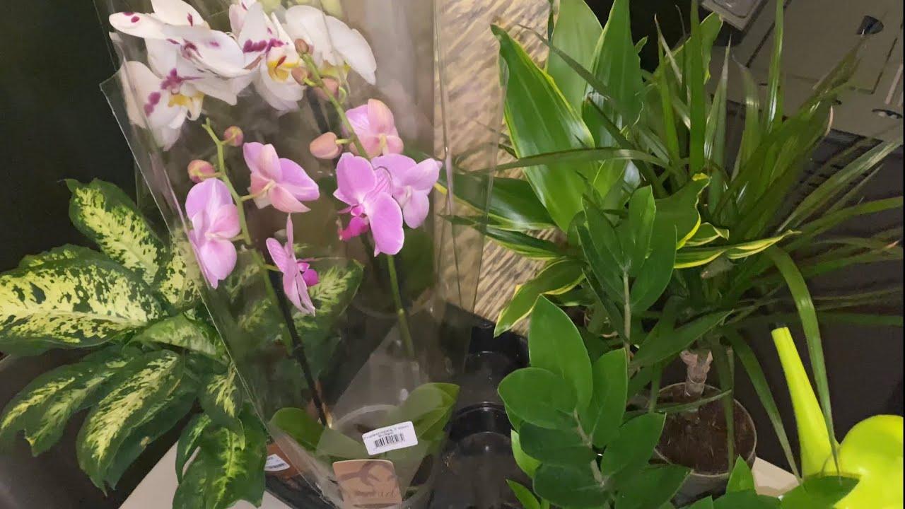 Какие цветы пополнили мою коллекцию в доме