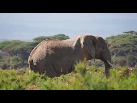 PC298761   Olifanten Amboseli NP
