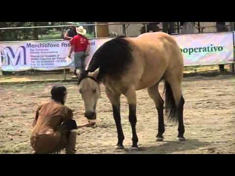 Full download spirit cavallo selvaggio for Spirit colonna sonora