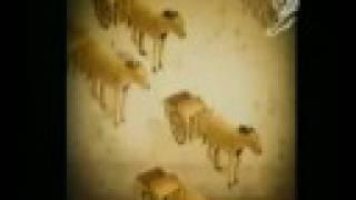 """Каннские львы - 2007 """"Лошадиный зад"""""""