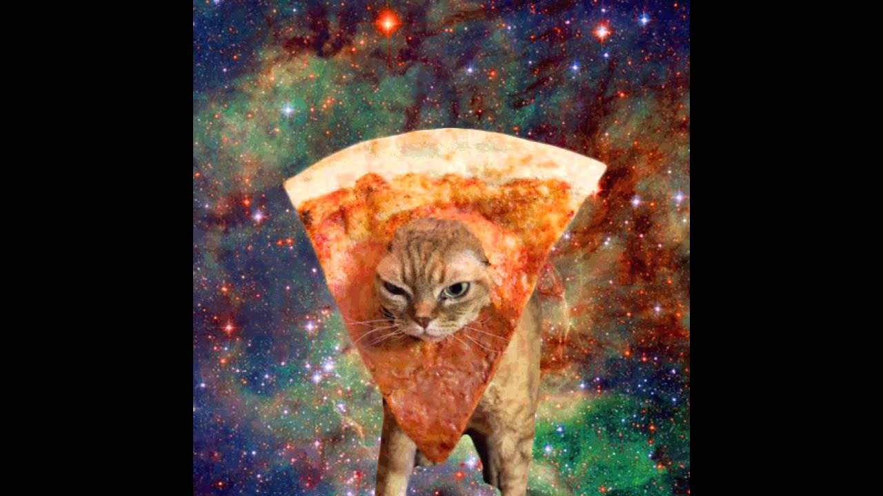 Are You Making Bread Cat Gif
