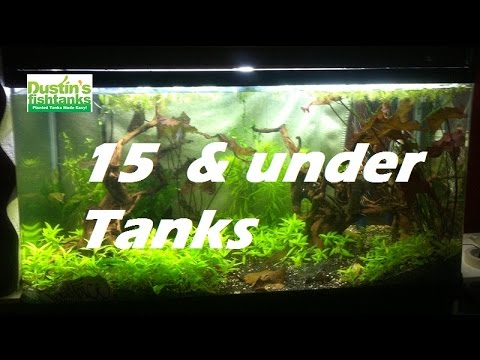 beginners-with-aquariums,-15-and-under-fish-tank-contest-entries