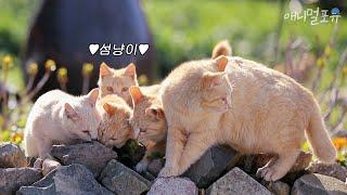 한국에도 고양이섬이 있어요! 귀여운 섬냥이들,,,♥|KBS 김영철의 동네 한바퀴 200411방송