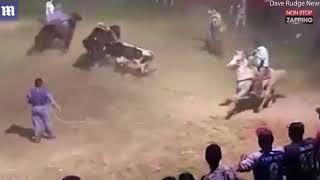 Un taureau hors de contrôle lors d'un rodéo, les images chocs vidéo