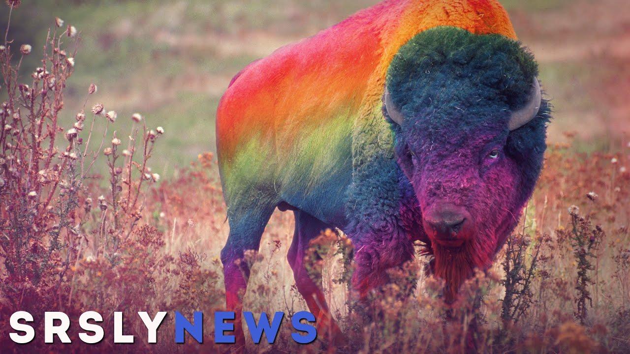 Homosexualität Tiere