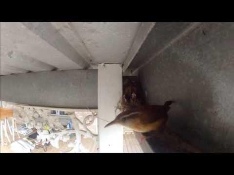 Mother Bird Feeding Babies 3