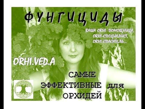 ФУЗАРИОЗ - УБИЙЦА ОРХИДЕЙ