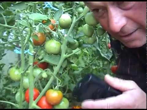 que faire en juin au jardin 28 juin on mange des tomates de jardins youtube. Black Bedroom Furniture Sets. Home Design Ideas
