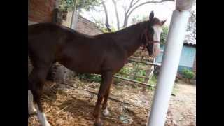 pepito y su caballo
