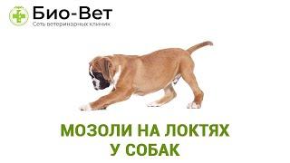 Мозоли На Локтях У Собак & Причина Мозолей На Локтях У Собак. Ветклиника Био-Вет