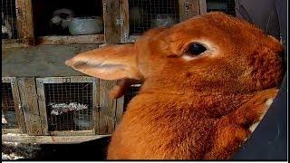 Уход за кроликами зимой ч1