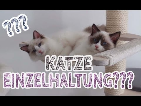 DARUM Haben Wir 2 KATZEN | Einzelhaltung Katze Artgerecht? Kitten Einzeln Halten