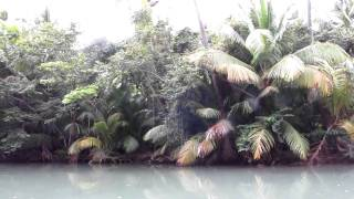 Indian River, Dominica II