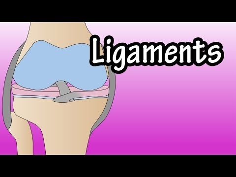 Ligaments - What Are Ligaments - Functions Of Ligaments - What Is A Torn Ligament