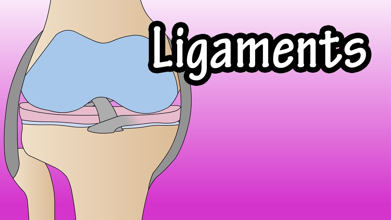 What are ligaments