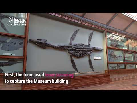 Rhomaleosaurus: Creating a virtual reality sea dragon | Natural History Museum
