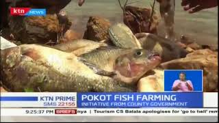 West Pokot is grooming to fish farming and the returns look promising