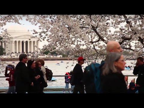 TIA&TW - America & Japan: Cultural Fusion