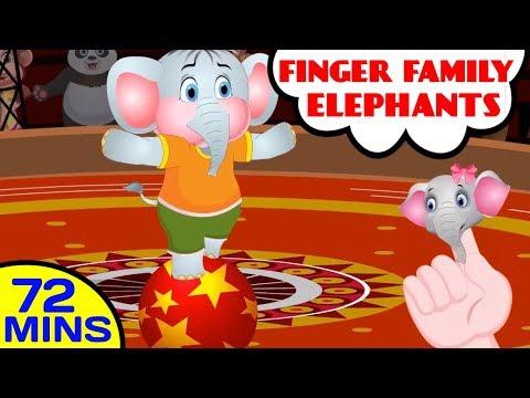 Elephant Finger Family | Daddy Finger | Nursery Rhymes & Animal Songs | Baby Hazel Nursery Rhymes