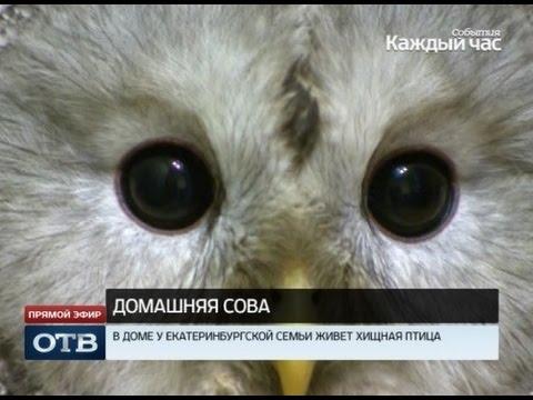 Житель Екатеринбурга приручил сову Гарри Поттера