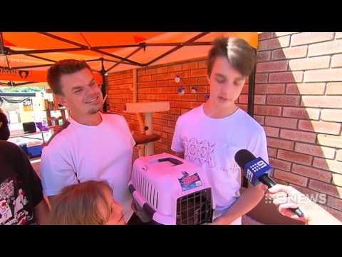 Free Felines | 9 News Perth