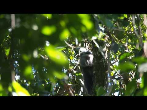P1069570   Primaat Kakamega Forest NR